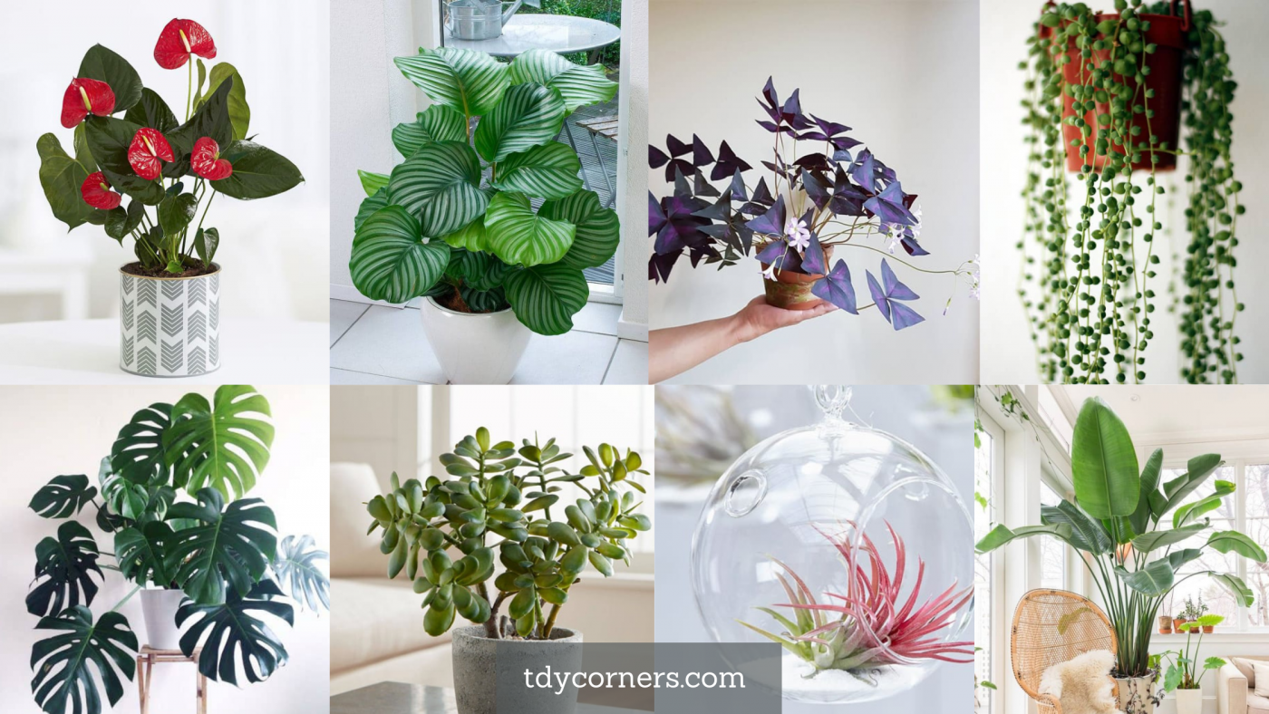 TDy Corners 21 Indoor Plants Are Both Good For Health And Easy To Take Care