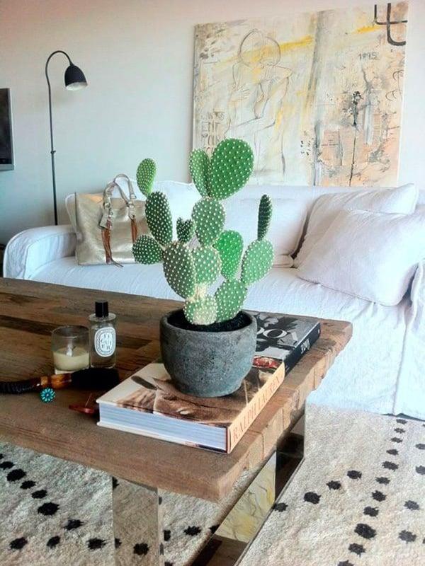 TDy-Corners-indoor-Bunny-ear-cactus-plant