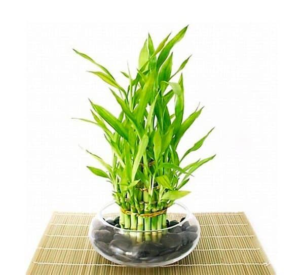 TDy-Corners-indoor-Chinese-water-bamboo