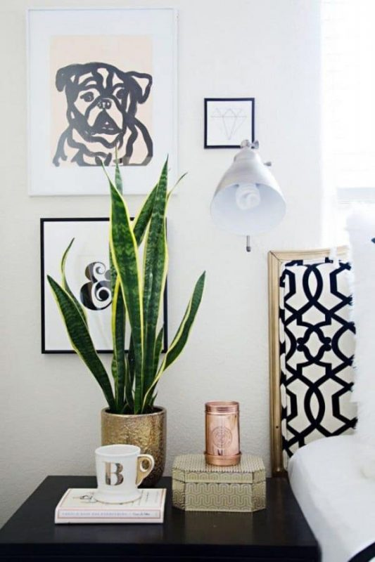 TDy-Corners-indoor-Snake-plant