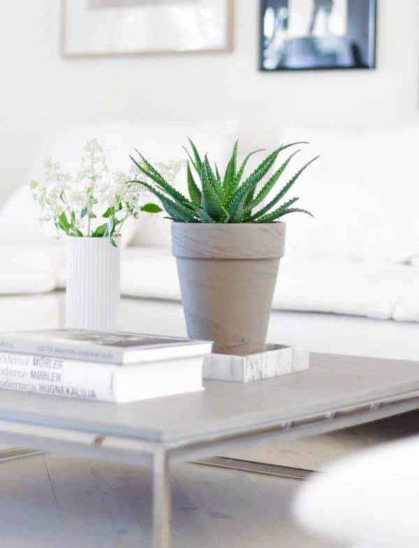 TDy-Corners-indoor-aloe-vera-plant