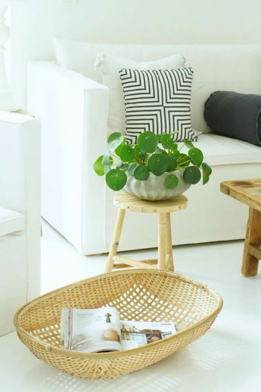 TDy-Corners-indoor-plant-Chinese-money-Plant