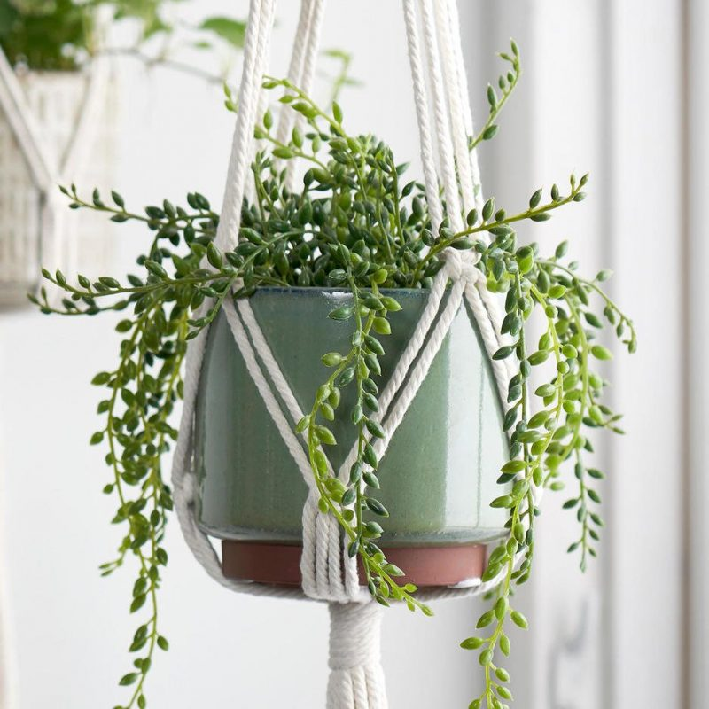 TDy-Corners-suitable-plant-for-macrame-hanger