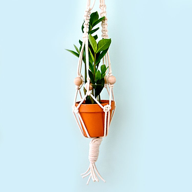 TDy-Corners-suitable-plant-for-macrame-plant-hanger