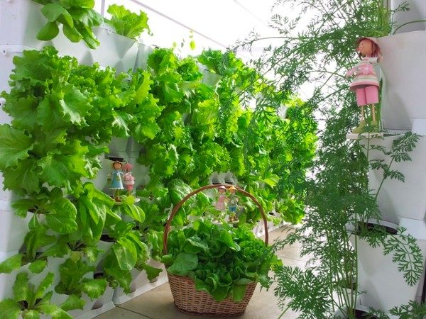 TDy-Corners-vertical-garden-by-making-rows-1