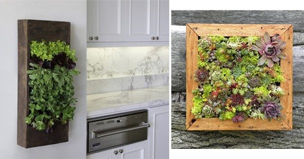 TDy-Corners-vertical-garden-by-using-frame-1
