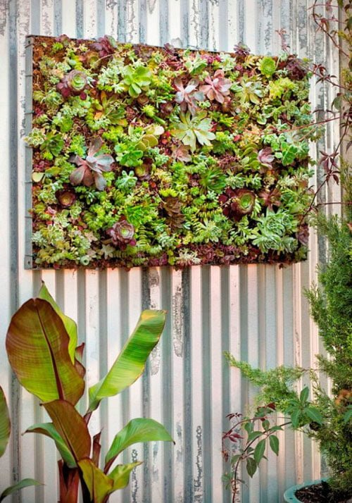 TDy-Corners-vertical-garden-by-using-frame